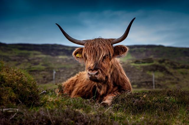 Tipps & Tricks: Schottland