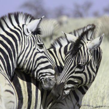 Kultur & Traditionen Namibia