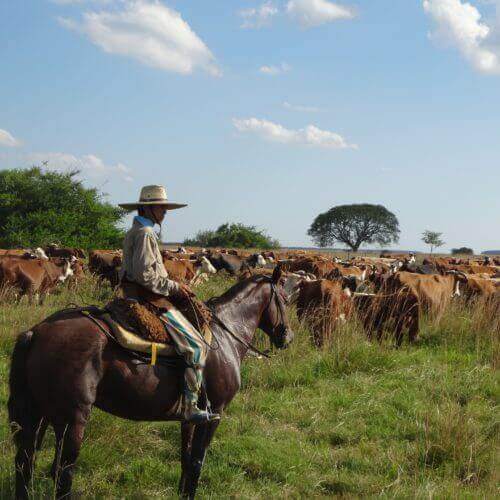 Tipps & Tricks: Farmarbeit in Argentinien