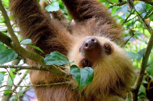 Nachgefragt: Costa Rica