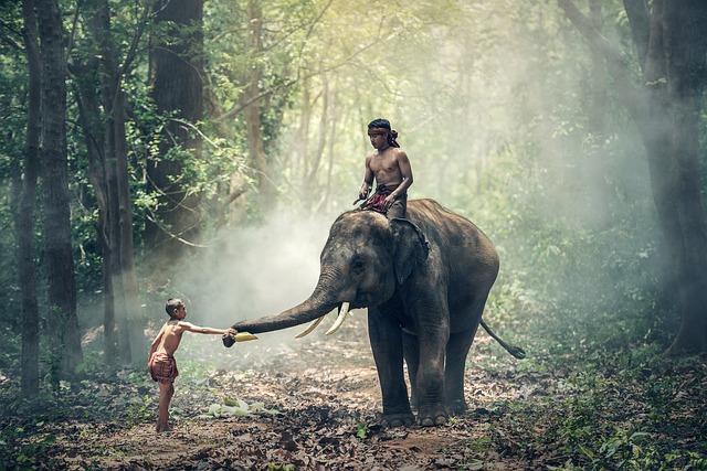 Kulturdschungel Kambodscha