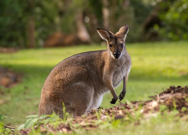 Nachgefragt: Australien
